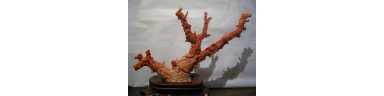 Chinese Coral Figure Group
